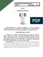 Curs 2 - Glomerulonefritele
