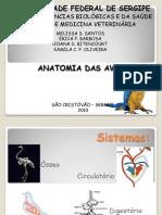 Slide de Anatomia Das Aves