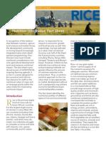 ACDIVOCA Nutrition Rice Softcopy
