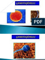 gametogenesis2c-090515160651-phpapp01-110610202742-phpapp01