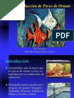 Producción de peces de ornato