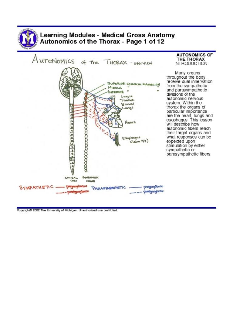 Autonomics Thorax   Autonomic Nervous System   Vagus Nerve