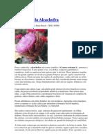 Benefícios da Alcachofra