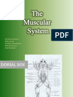 Bio 22 Post-Lab - The Muscular System (New Ver.)