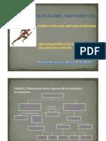 La Neurofisiologia Del Movimiento1