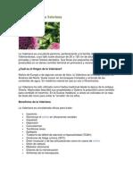 Medicina Alternativa Valeriana y Ruda.