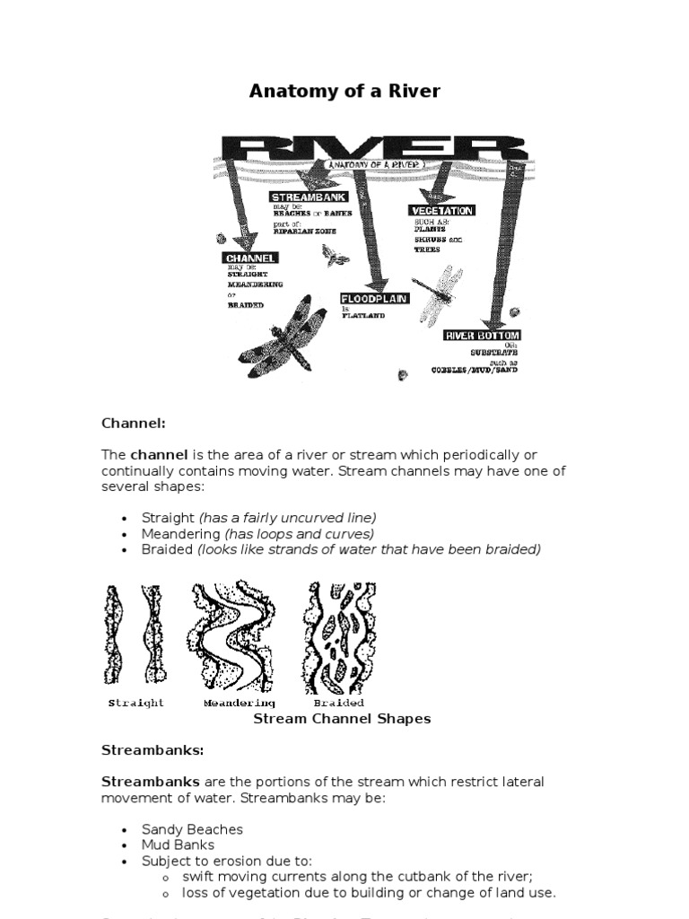 Anatomy of a River | Floodplain | River