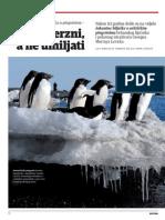 Pingvini huligani, Nacional 866