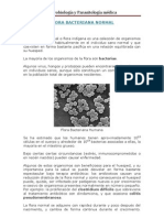 Flora Bacteriana Normal