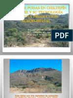 6.- Manejo de Podas de Chiltepin Silvestre - Copia