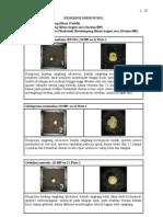 Deskripsi Mikrofosil