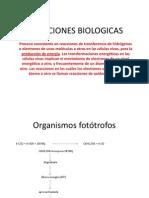 OXIDACIONES BIOLOGICAS PAWER