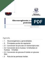 [6]Gluconeogénesis y via de las pentosas fosfato