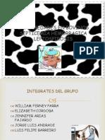 enfermedadesenbovinos-110619104903-phpapp02
