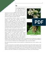 Planta Insectaria