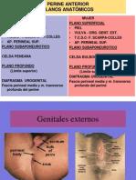 Genitales Masculino y Femenino Clase de Juan