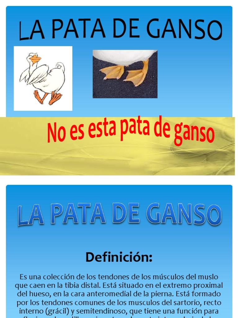 Forman La Pata De Ganso - Free Proxy