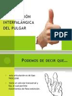 Articulación interfalángica del pulgar