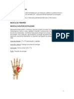Musculos das mãos