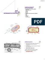 2Ultrastr_bacteriilor