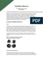 Gladiolus Diseases0