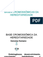 basecromossômica