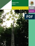 Arboles Selva Lacandona