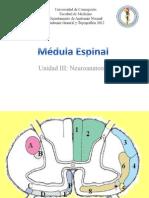 Médula Espinal - Vías Ascendentes