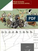 Taxonomia Primates