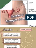 Ovario y Trompas Uterinas
