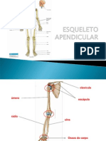 Anatomia Do Esqueleto Apendicular