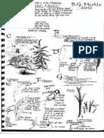 Tips for Field Sketching_B.G. Merkle (2012)