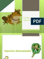 Familia Leptodactylidae Endemicos-Amenazadas