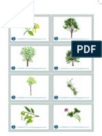 Nature LW Flashcards
