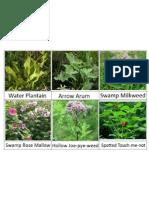 WTN Wetland Herbs
