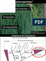 Evolucion Araucaria Gymnospermas I 2012 Teo