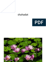 shahadat
