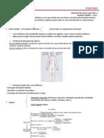 Morfofisiologia