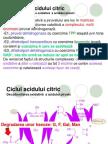 8Ciclul Acidului Citric