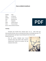 Paracoccidioides Brasiliensis