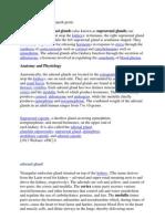glandula suprarenalis doc.docx