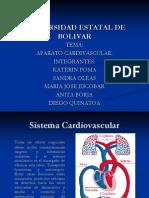sistemacardiovascular