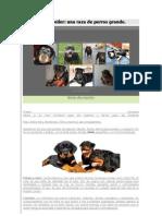 El Rottweiler Una Raza de Perro Grande