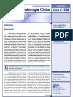 Dipylidium Caninum Pasiente 9 Meses de Edad
