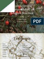 Alternaria Solani en Solanum Betaceum
