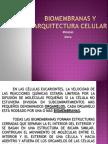 Biomembranas y Arquitectura Celular (Pptminimizer)