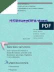 Presentación de Proceso