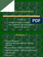Cellular Accumulation 1