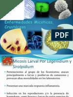 Enfermedades Micoticas Crustaceos
