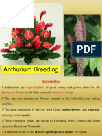 Anthurium Breeding ppt by S Y Chandrashekar